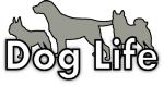 Hundskötare sökes till fint hundcenter