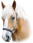 Jobba med djur, hästar och människor